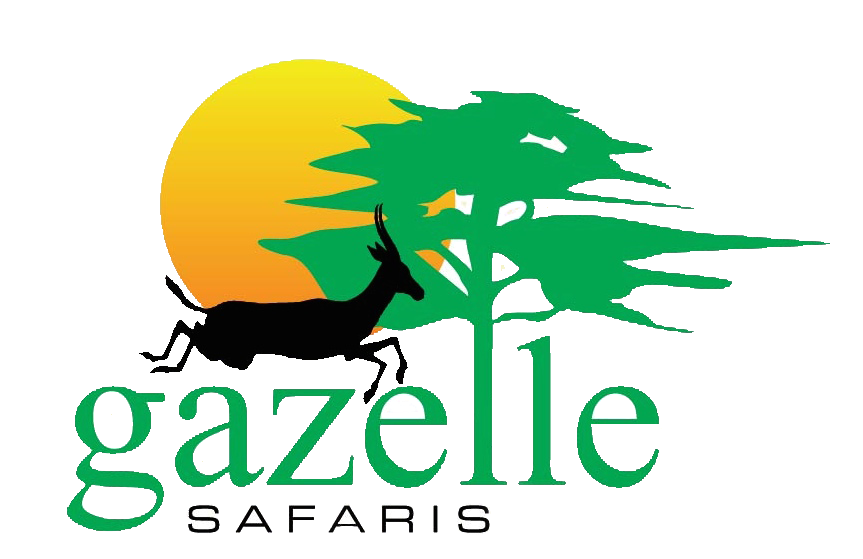 logo gazelle vector copy.png