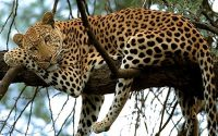 kenya-lodge-safari.jpg
