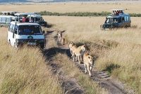 mini vans for safari tour in Kenya