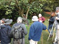 Gorilla Tracking Safari Ugand Gorilla Tour.jpg