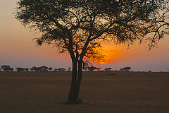 zimbabwe safari photo