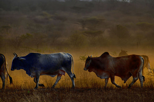 swaziland photo