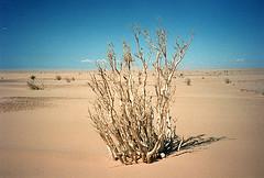 mauritania photo