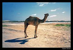 somalia beautiful photo