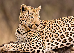 namibia safari photo