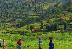 rwanda landscape photo