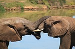 south africa safari photo