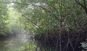 Ilhas-de-Orango