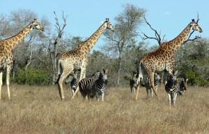 Lesotho wildlife Safari