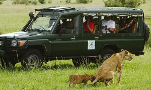 African Safari Game drives