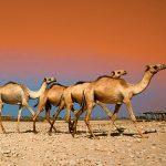 somalia tours