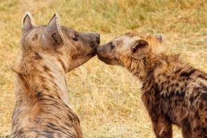wildlife botswana