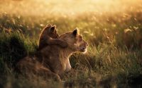 mother lion with cub.jpg