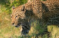 Central_Kalahari_Game_Reserve_010.jpg