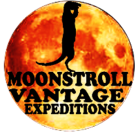 LOGO-moonstroll.png