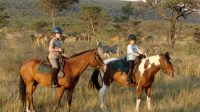 Ants-Nest-boys-riding-with-cows-and-zebra-1-750x420.jpg