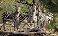 selous game reserve Tanzania wildlife safari.1 jpg.jpg