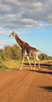 The Ultimate Guide to Wildlife Safari in South Africa