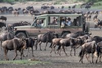 serengeti-migration-safari.jpg