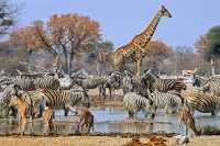 South-Africa-Safari-animals.jpg