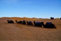 Ride camel in desert Merzouga