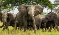 Elephants-in-Queen-Elizabeth-National-Park-750x450.jpg