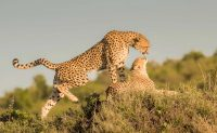 wildlife safari-tz.jpg