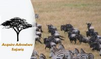 Acquire Adventures Safaris.jpg