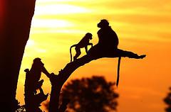 zimbabwe safari photo