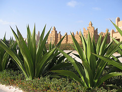 cape verde holidays photo