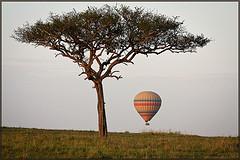kenya safari photo