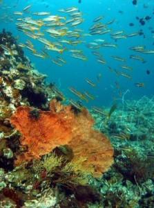 Kenya Coral reefs