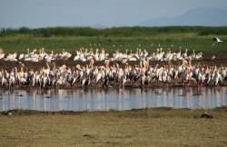 Birds on Lake Manyara