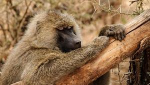 Mkomazi-National-Park