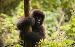Virunga-National-Park