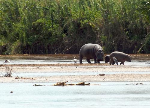 burundi wildlife safaris