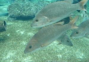 Diving at Durban Coast