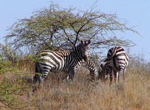 Ethopia wildlife