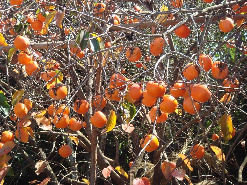 fruits of madagascar