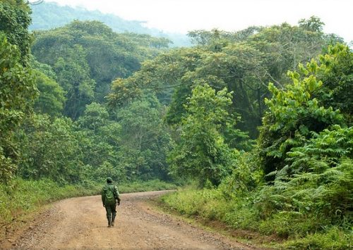 getting to gorillas in congo