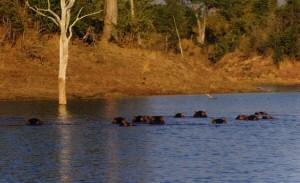 Matusadona Park Zimbabwe
