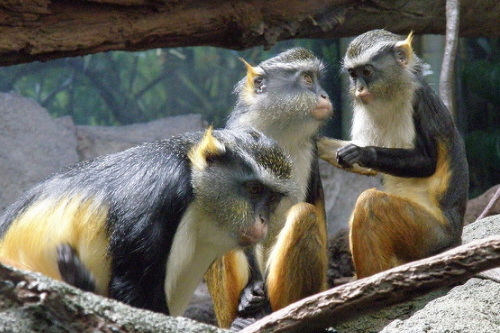 monkeys of madagascar