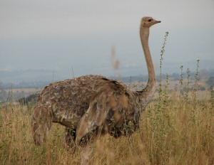 Nairobi Park Wildlife