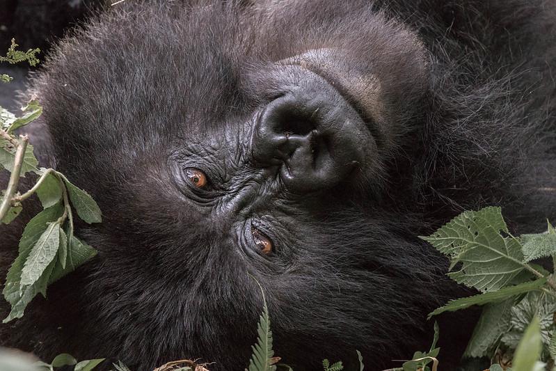 volcanoes safaris Rwanda